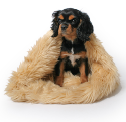 Champagne Mousse Faux Fur Trundle Dog Bed