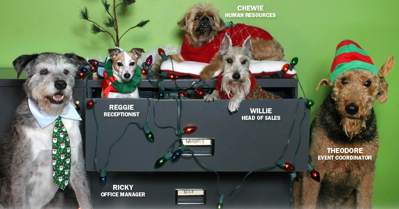 Office Pups