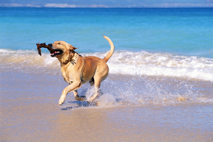 dog-on-beach